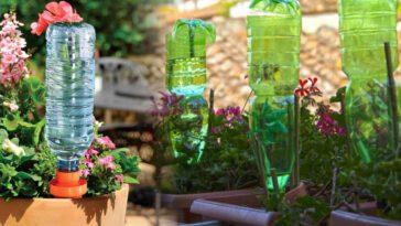 Découvrez pourquoi il est important de planter une bouteille dans vos pots de fleurs
