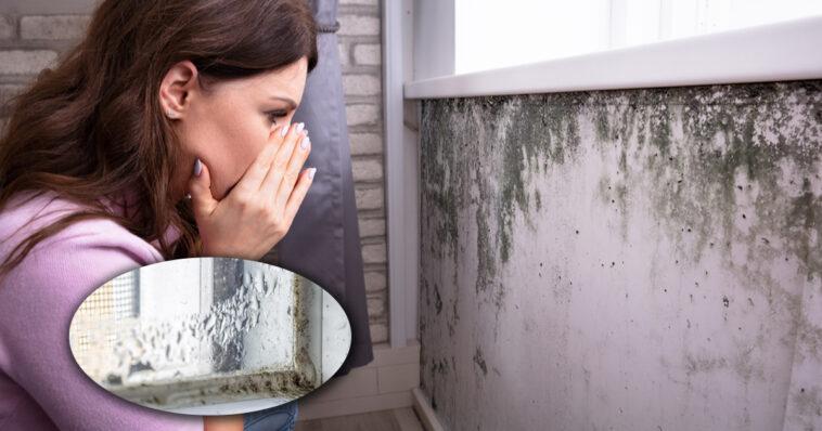 Humidité dans la maison Voici les 6 choses à faire