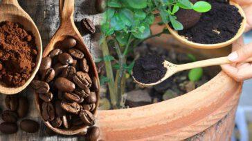 Ménage, jardin… Découvrez nos astuces avec du marc de café