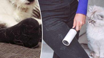 Voici 4 astuces magiques pour se débarrasser les poils d'animaux de vos vêtements et de votre canapé