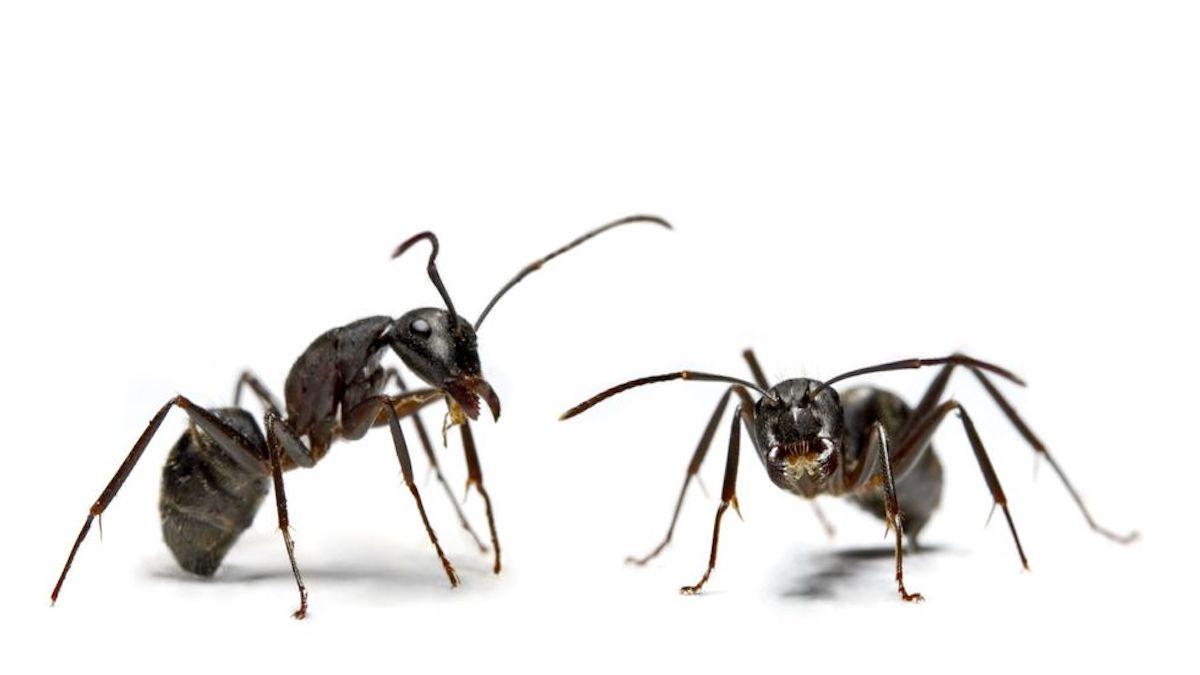 Voici 6 astuces naturelles hyper efficaces pour éloigner les fourmis de sa maison